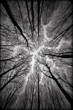 vvv circulatory system of the forest by Alexandr Popovsky