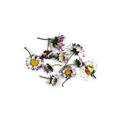 Daisies, Tiny 901 ($3) ❤ liked on Polyvore featuring home, home decor, floral decor, fillers, flowers, plants, nature, backgrounds, flower home decor and funky home decor