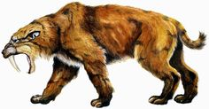 The saber-toothed cats were found worldwide from the Eocene epoch to the end of the Pleistocene epoch (42 mya – 11,000 years ago), existing for about 42 million years.