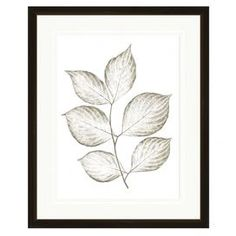 """Equally at home in an artful collage or on its own as an eye-catching focal point, this framed giclee print showcases a leaf motif for natural inspiration.  Product: Framed wall artConstruction Material: Paper and woodColor: Black frameDimensions: 21.75"""" H x 17.75"""" W"""