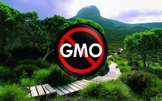 Tasmania to Remain GMO Free for 5 more Years to Protect Honey Exports