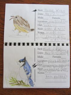 backyard bird notebook - The Unlikely Homeschool