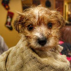 After his first bath  http://ift.tt/2l9WaDh