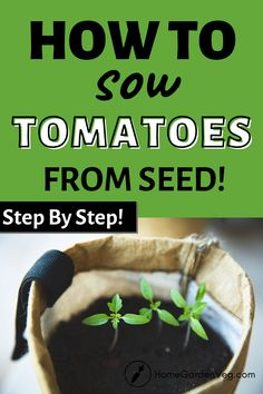If you want a pantry loaded with fresh homegrown tomatoes, but don't know where to start, here's a post to help you. Learn how to grow tomatoes from seed for a bountiful harvest. Getting those healthy, juicy tomatoes from your kitchen garden isn't hard if you're familiar with some basic steps. If this is your first time, we'd recommend that you click to follow the conventional steps to ensure a thriving crop. Tomato Seedlings, Tomato Seeds, Plant Labels, Grow Tomatoes, Bountiful Harvest, Liquid Fertilizer, How To Grow Taller, Sprouts, Pantry