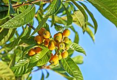 marula oil-It's full of fatty acids, which dermatologists say soothe dry skin. Plus, it absorbs quickly and won't leave you shiny or greasy.