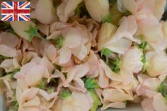 British Peach Sweet Peas New Covent Garden Flower Market - May 2016