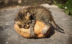 I love this potato.