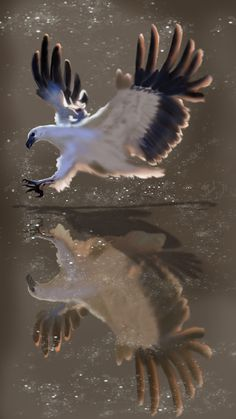 Fishing Eagle (digital paint)