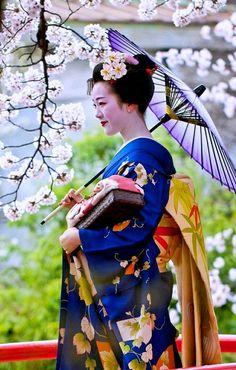 "geisha-kai: ""April maiko Tomitae of Gion Higashi under cherry blossoms by blue n white "" Geisha Japan, Geisha Art, Kyoto Japan, Okinawa Japan, Japan Japan, Japanese Beauty, Japanese Fashion, Asian Beauty, Japanese Kimono"
