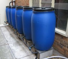 Setting up a rain water collection system using plastic drums.