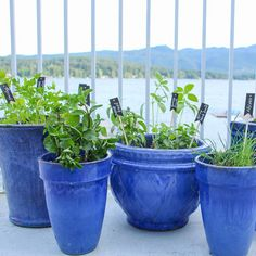Make your own easy DIY kitchen herb garden in deck pots so that you can have fresh herbs at your fingertips all summer bbq season long.