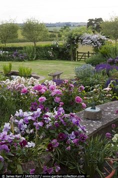 View of sunken garden with roses and pansies in foreground - Knowle Farmhouse Summer Story