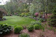 Landscape Borders, Garden Landscape Design, Landscape Designs, Planting Shrubs, Planting Flowers, Hydrangea Quercifolia, Shasta Daisies, Hillside Landscaping, Landscaping Ideas