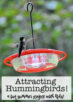 One of my absolute favorite things about summer is sitting on my porch in my rocking chair, right next to the bird feeders I have set out in the hopes of attracting hummingbirds! And now my kids look forward to doing it each summer too! Summer Crafts, Summer Fun, Crafts For Kids, Summer Ideas, Attracting Hummingbirds, How To Attract Hummingbirds, Humming Bird Feeders, Family Traditions, Kid Friendly Meals
