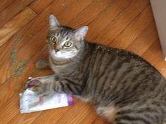I do not have a catnip problem!
