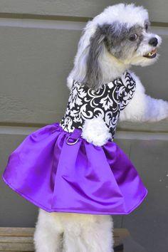 Easter Bunny Rabbit White Top Purple Rose Floral Skirt Cat Pet Dog Puppy Dress