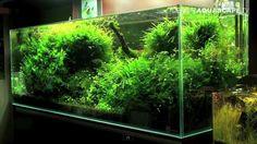 Amazing planted aquariums of roslinyakwariowe.pl
