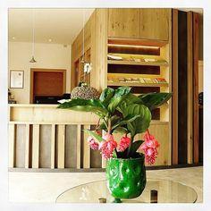 #welcome #hotelamhang #hotel #reception #foyer #beautifulhotels #beautifuldestinations #hotellobby #flowers #wood #light #timetorelax #holiday #secondhome #südtirol #ritten #visititaly #thehillhotel #amhang #ritten #renon #bozen #italy #mountain #dolomiten #dolomites Hotel Reception, Foyer Design, South Tyrol, Das Hotel, Visit Italy, Hotel Lobby, Beautiful Hotels, Traveling, Mountain