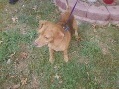 #FOUNDDOG 9-8-13 #EVANSVILLE #IN DUNSEE DR MALE MIX BLUE COLLAR NO TAGS EVANSVILLE ANIMAL CARE AND CONTROL 815 UHLHORN AV EVANSVILLE IN