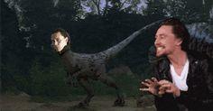oh.my.god. #jurassicpark #velociraptor #gif