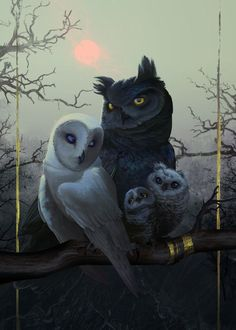 Fantasy (two different species, wouldn't normally be in the same state or area) but darling! Poster Birds of a Feather owls Owl Photos, Owl Pictures, Owl Wallpaper Iphone, Cute Owls Wallpaper, Buho Tattoo, Tattoo Owl, Owl Artwork, Owl Family, Beautiful Owl