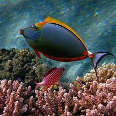 .Beautiful tropical reef fish