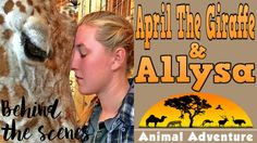 Meet the Expectant Giraffe Behind the Viral Live Cam | April & Allysa - YouTube