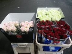 from grower available at www. Roses, Passion, Food, Meal, Pink, Essen, Hoods, Rose, Meals