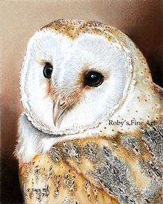 beautiful   Barn Owl Art Print Wildlife Birds by Roby Baer PSA by RobyBaer, $7.50