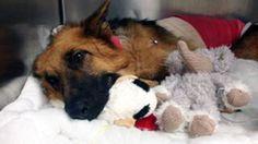 Sassy the rescued dog