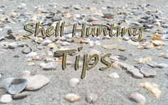 Myrtle Beach Shell Hunting Tips | Captain's Quarters Myrtle Beach Resort