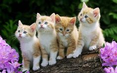 funny cat desktop wallpaper widescreen Picture