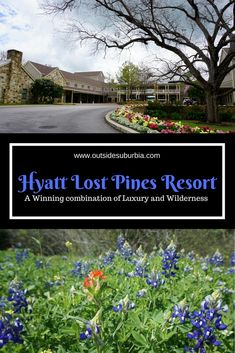 Spring is the best time for a road trip in Texas when the sides and medians of the highways are blooming with bluebonnets and other wildflowers. Travel in the USA. Texas Travel, California Travel, Travel Usa, Travel Tips, Travel Ideas, Travel Advice, Best Resorts, Hotels And Resorts, Luxury Hotels