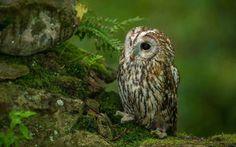 Sweet little Owl <3                                                                                                                                                                                 More
