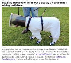 Bee keeper doggy, Baz!