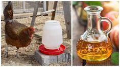 Farm Life, Alcoholic Drinks, Wine, Glass, Food, Drinkware, Corning Glass, Essen, Liquor Drinks