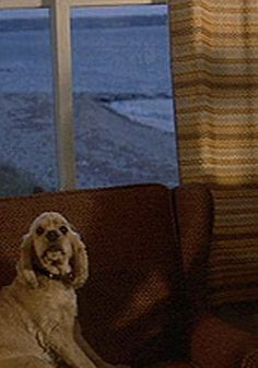 spielberg's dog, elmer