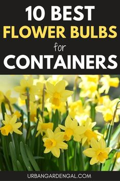 10 Flower Bulbs for Containers Flower bulbs grown in containers look spectacular. Here are 10 of the best flower bulbs to grow in pots or containers. Summer Flowering Bulbs, Summer Bulbs, Spring Bulbs, Flowering Plants, Garden Bulbs, Planting Bulbs, Planting Flowers, Flower Gardening, Garden Plants