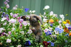 208 best Stop and Smell the Flowers images on Pinterest   Cute pets     17 Adorable Animals Smelling Flowers   Cute bunny sniffing the flowers