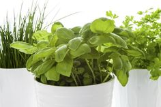 Herbs are a must for every garden. David Domoney talks you through growing a variety of herbs in pots, planters and window boxes Growing Herbs In Pots, Growing Vegetables At Home, Planting Vegetables, Fresh Vegetables, Herb Garden, Indoor Garden, Indoor Plants, Vegetable Planting Calendar, Herbs Indoors