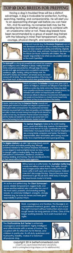 TOP 10 DOG BREEDS FOR PREPPING/I HAVE 3 GERMAN SHEPS.