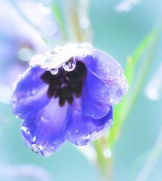 Still Life Flowers, Rain, Photograph, Rain Fall, Photography, Photographs, Waterfall, Fotografia, Fotografie