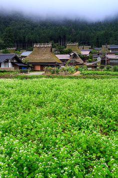 美山かやぶきの里 蕎麦畑! : THE PHOTO DIARY By CANON!
