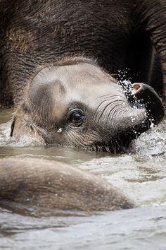 """Baby Elephant"" by Björn Mika."