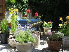 My backyard/patio in Courtenay