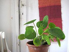 54 besten sch ne flora bilder auf pinterest zimmerpflanzen gr n und g rtnern. Black Bedroom Furniture Sets. Home Design Ideas