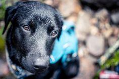 Hes a good boy. . . . . . . . . . . #labmix #bogoes #fishingpup #mydogismy #iandloveandyou #myilypet #ynotoutdoors #blacklabsmatter #optoutside #nikond500 #nikontop #wildernessculture #nikon35mmf18 #bestwoof
