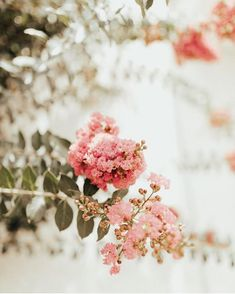 Beautiful Flowers Images, All Flowers, My Flower, Pretty Flowers, Bloom Where Youre Planted, Plum Pretty Sugar, Plants Are Friends, Pretty Photos, Zinnias
