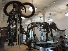 Museo de Historia Natural de la Ciudad de México