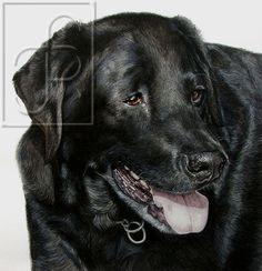' ROCKO ' black labrador watercolour painting by WildArtCapture | Julia Ruffles